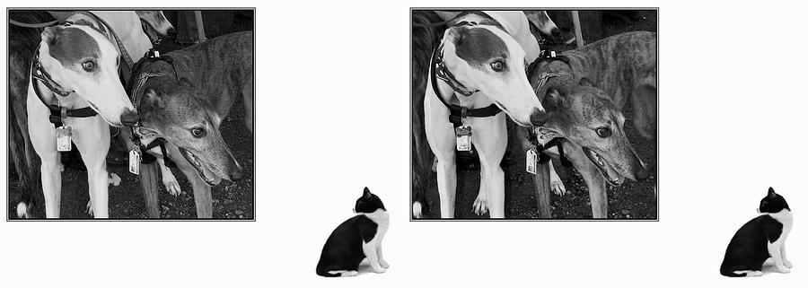 3d Photograph - Sworn Enemies - Gently Cross Your Eyes And Focus On The Middle Image by Brian Wallace
