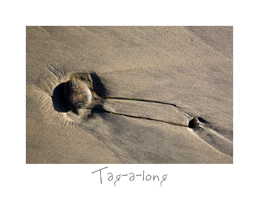 Beach Art Photograph - Tag-a-long by Peter Tellone