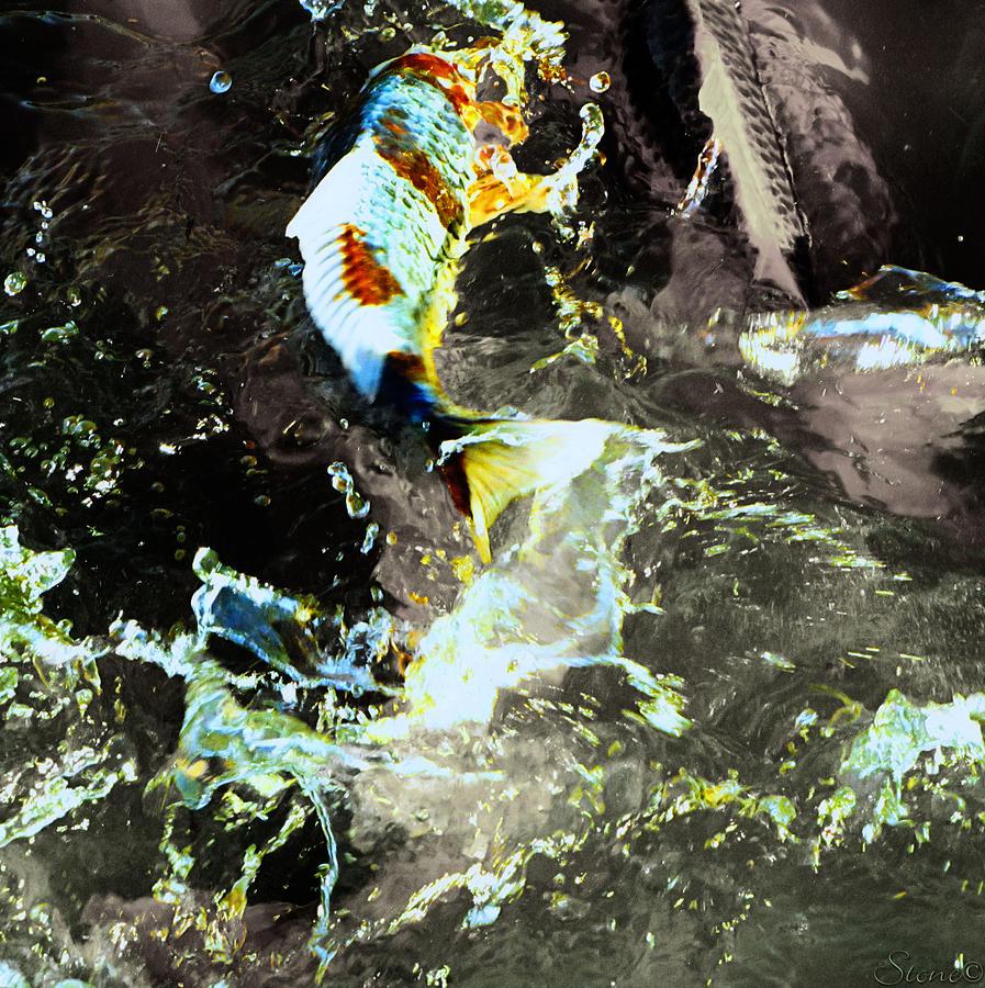 Stimpfach rechenberg japan koi wild gmbh for Japan koi wild