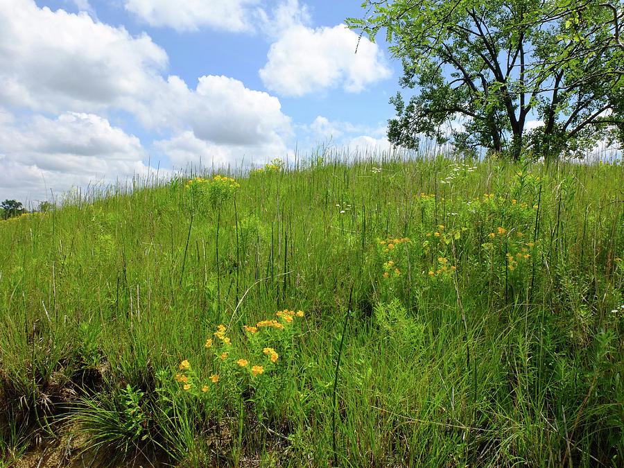 Landscapes Photograph - Tall Grass Hillside by Scott Kingery