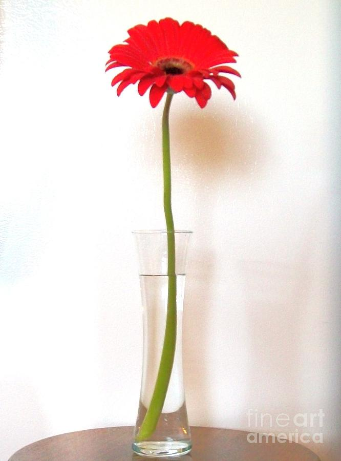 Tall Red Photograph