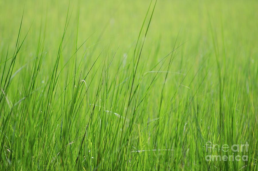 Tall Summer Grass Memories Photograph