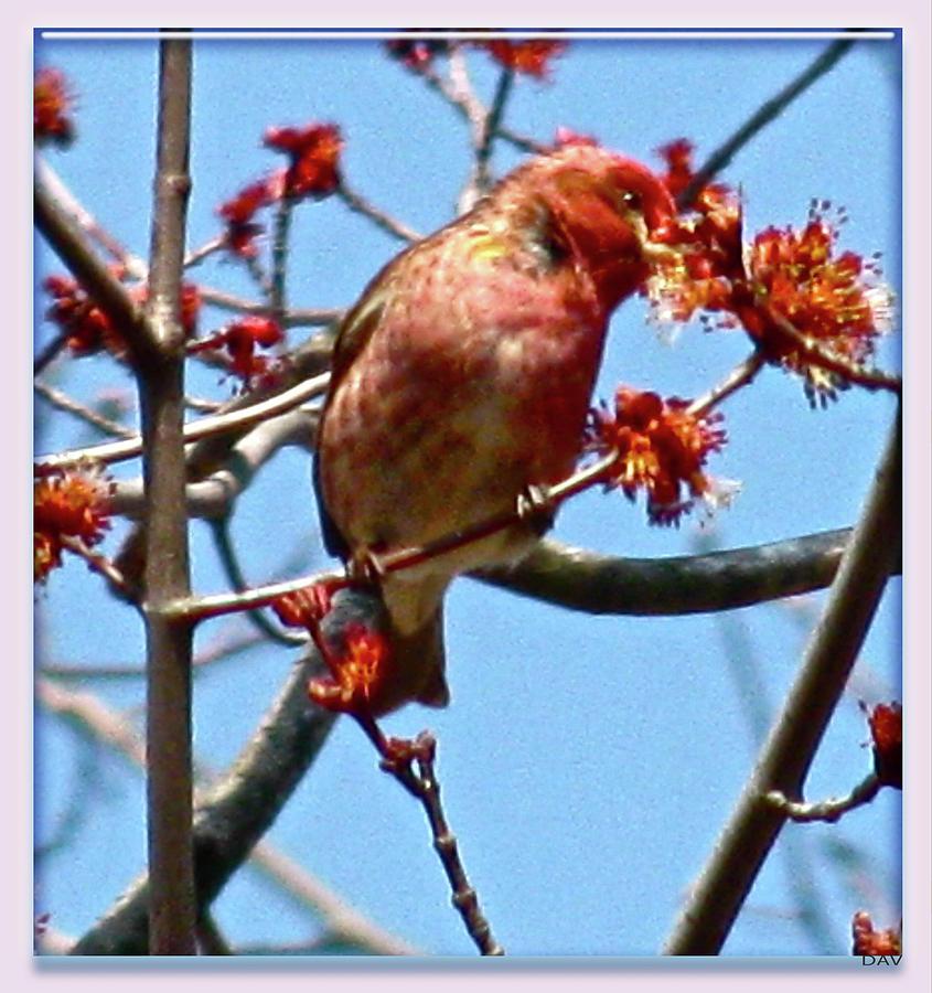 Blush Of Spring Photograph - Taste Of Spring by Debra     Vatalaro