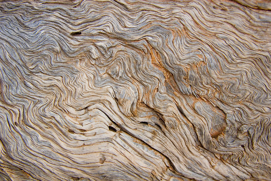 Utah Photograph - The Bark Of A Pine Is Sandblasted by Taylor S. Kennedy