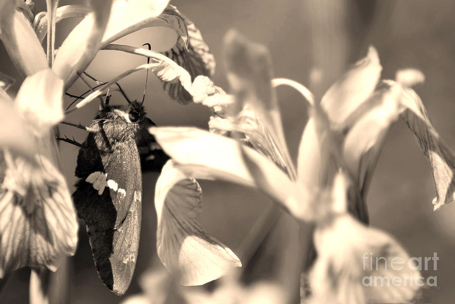 Fine Art Photograph - The Butterfly by Donna Greene