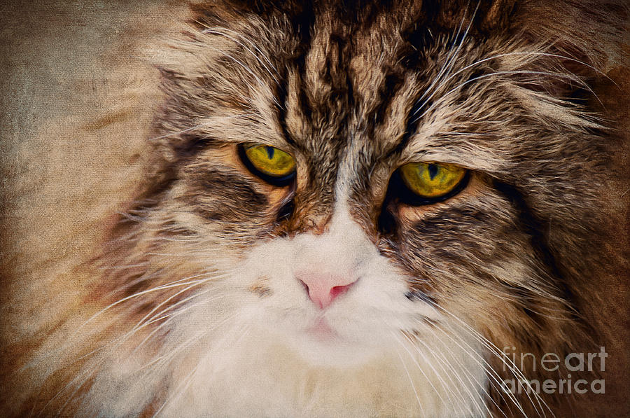 Cat Digital Art - The Cat by Angela Doelling AD DESIGN Photo and PhotoArt