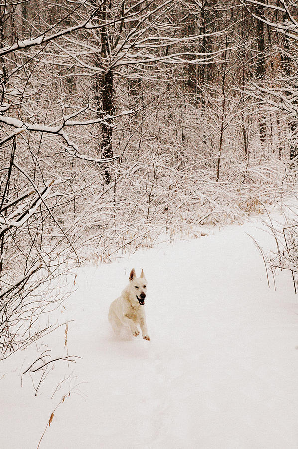 Dog Photograph - The Chase by Cheryl Helms