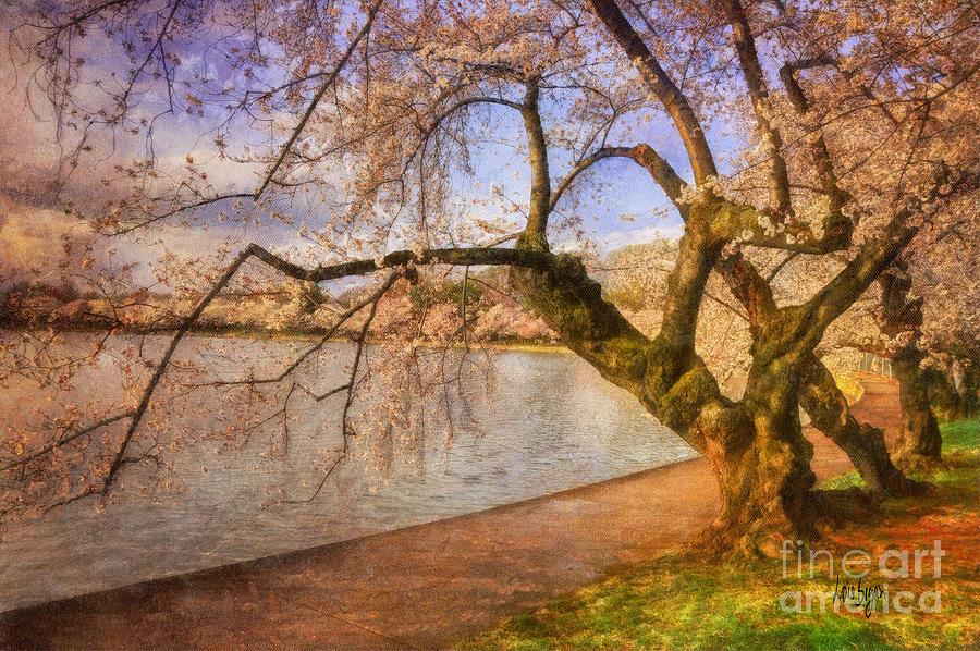 The Cherry Blossom Festival Photograph