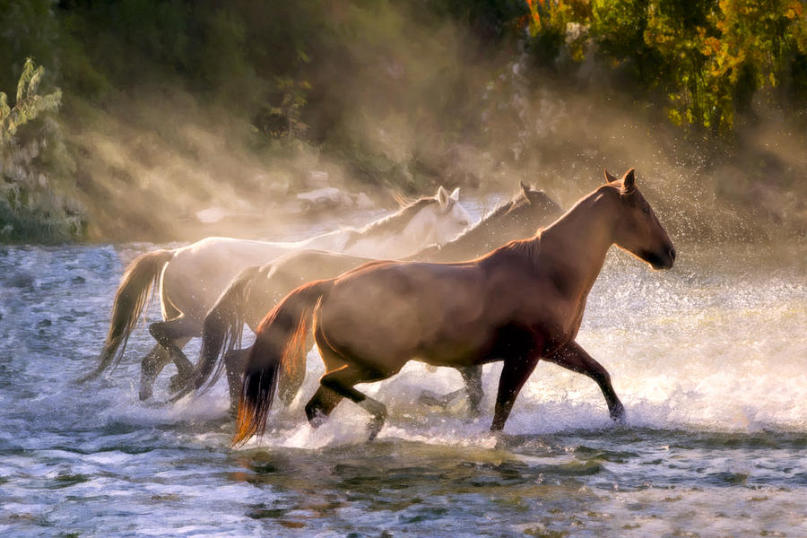 Horse Photograph - The Crossing by Janet Fikar