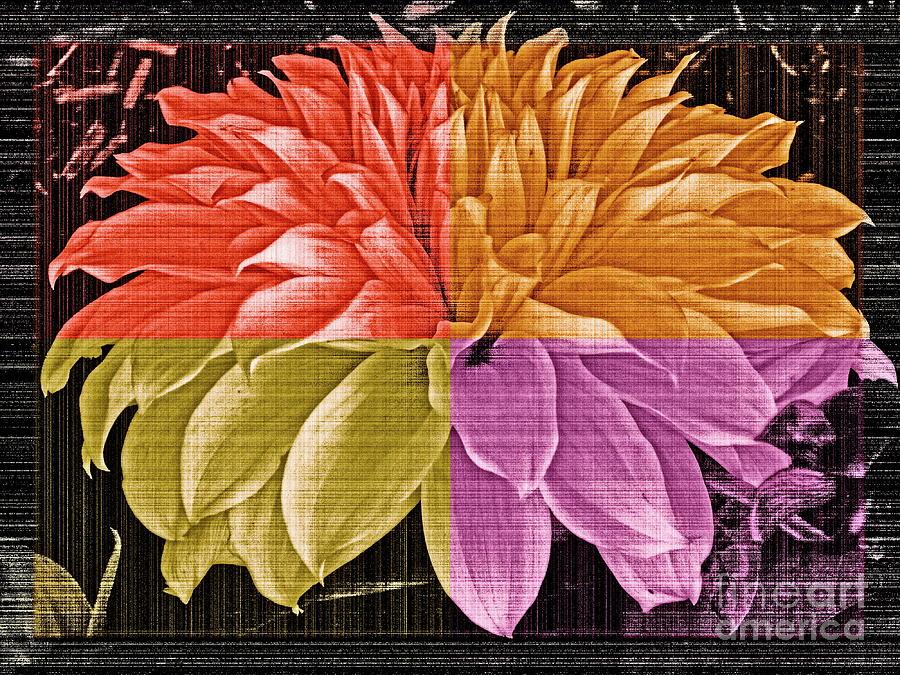 Dahlia Photograph - The Dahlia by Gwyn Newcombe