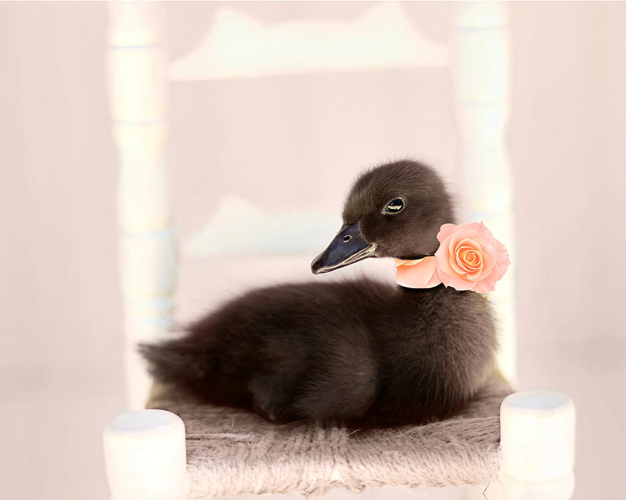Duck Art Photograph - The Debutante by Amy Tyler