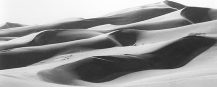 Sand Dunes Photograph - The Dunes by Allan McConnell