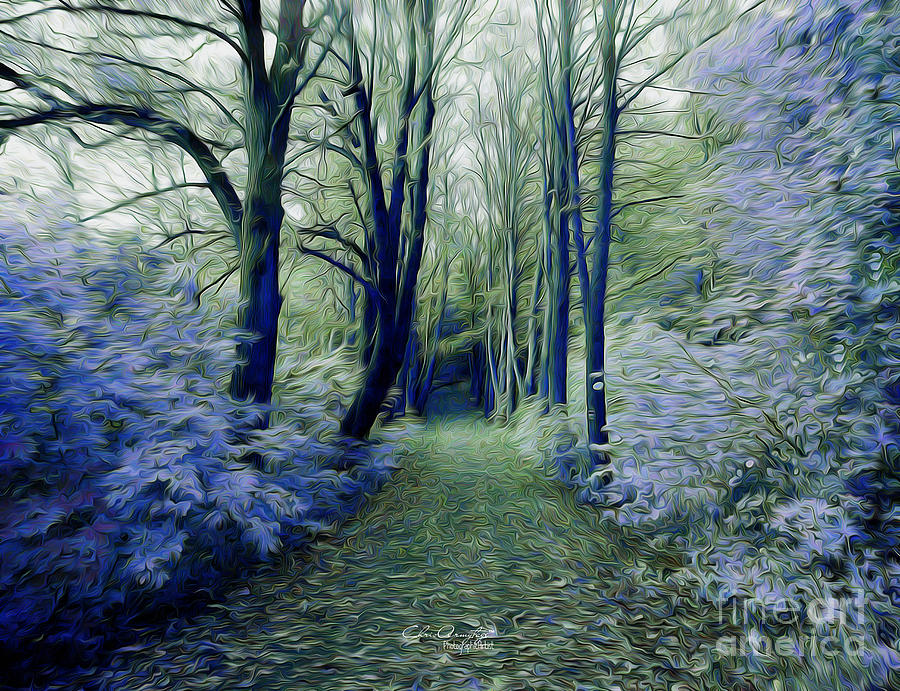 The Enchanted Wood Photograph
