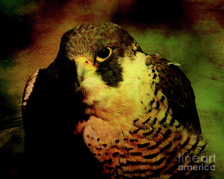 Texture Photograph - The Falcon by Wingsdomain Art and Photography