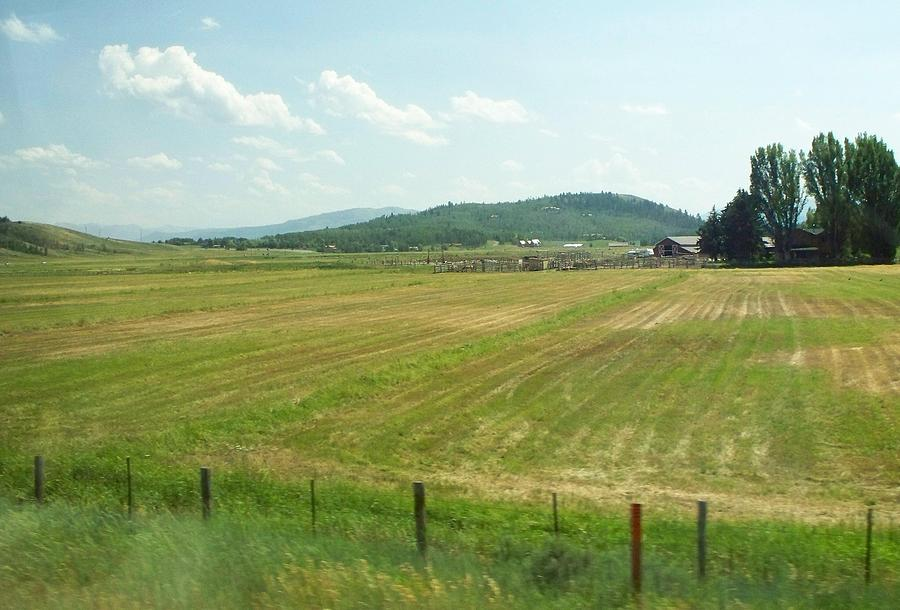 Landscape Photograph - The Fields Of Summer by Remegio Onia