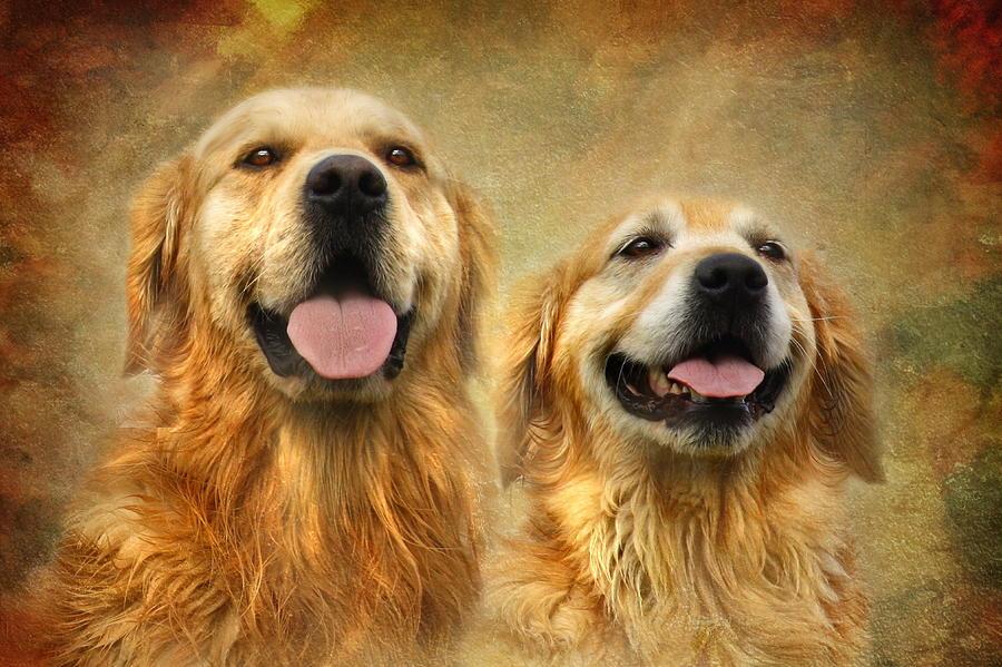 Golden Retriever Photograph - The Happy Couple by Trudi Simmonds