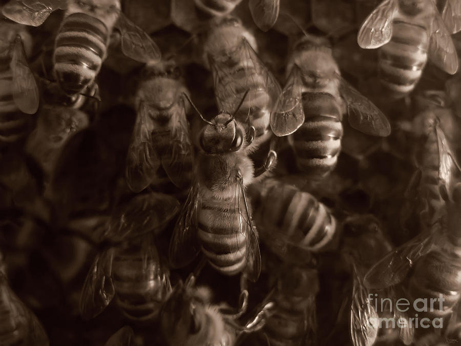 The Hive Photograph