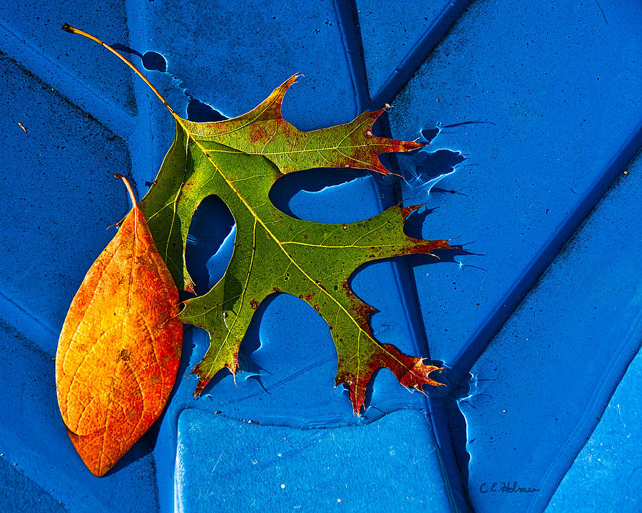 Leaf Photograph - The Last Dance by Christopher Holmes