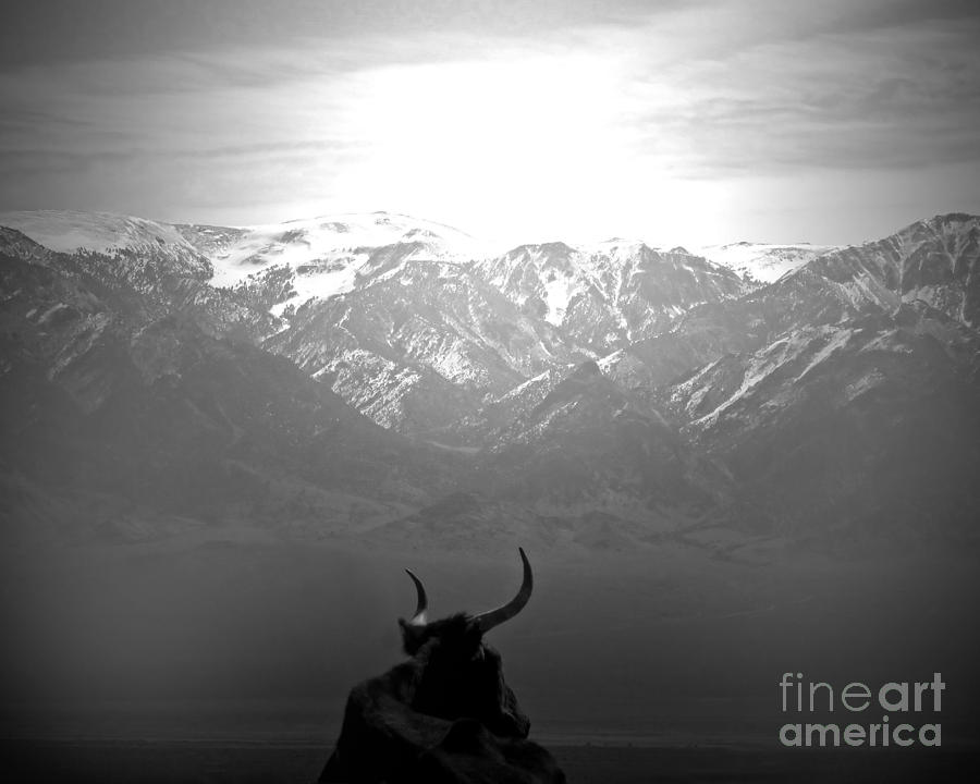 Cow Photograph - The Last Wild One by Megan Chambers
