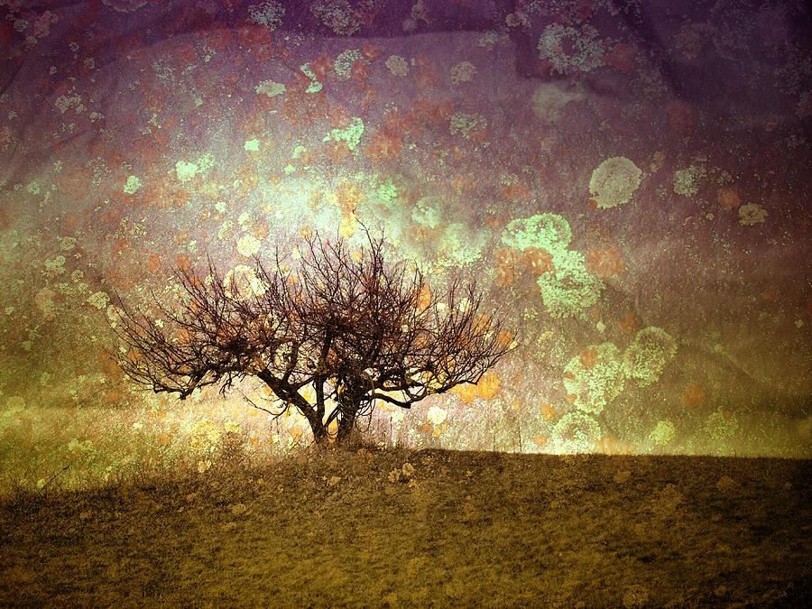 Tree Photograph - The Lone Tree by Tara Turner