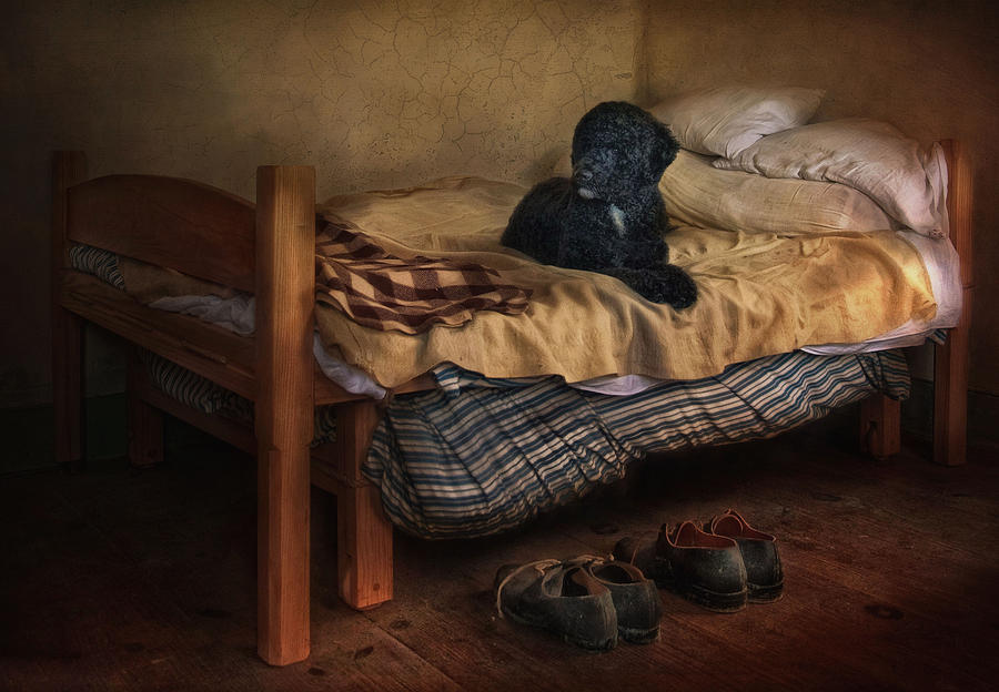 Portuguese Water Dog Photograph - The Masters Shoes by Robin-lee Vieira