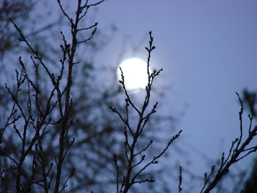Moon Photograph - The Moon by Liz Vernand