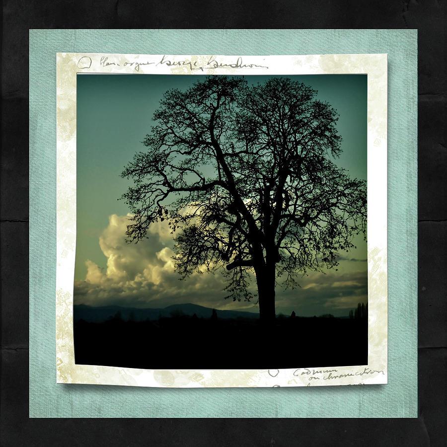 Oak Tree Photograph - The Old Oak by Bonnie Bruno