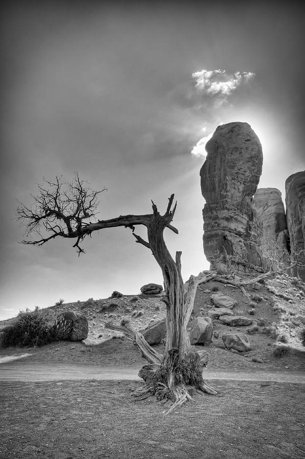 America Photograph - The Old Tree by Andreas Freund
