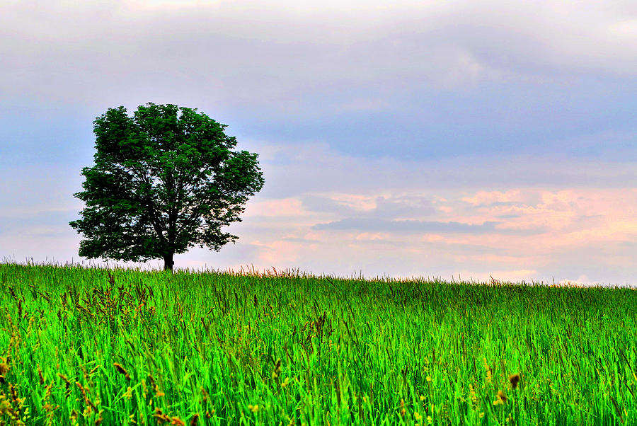 Tree Photograph - The Perfect Tree by Emily Stauring