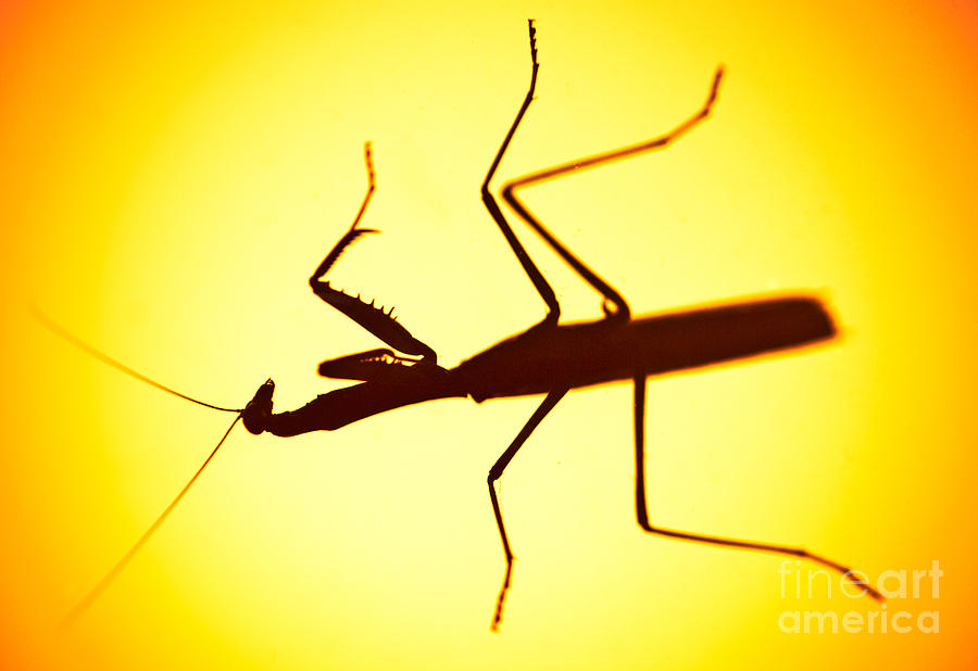 Bug Photograph - The Predator by Charles Dobbs