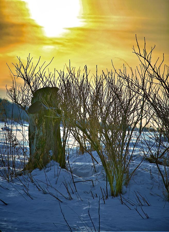 The Rabbit Trail Photograph