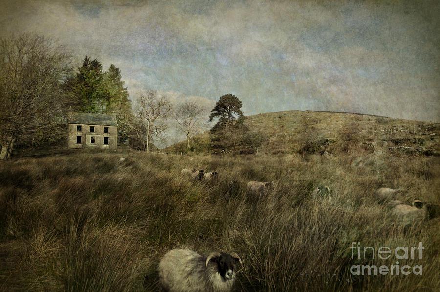 Ireland Photograph - The Ram by Marion Galt