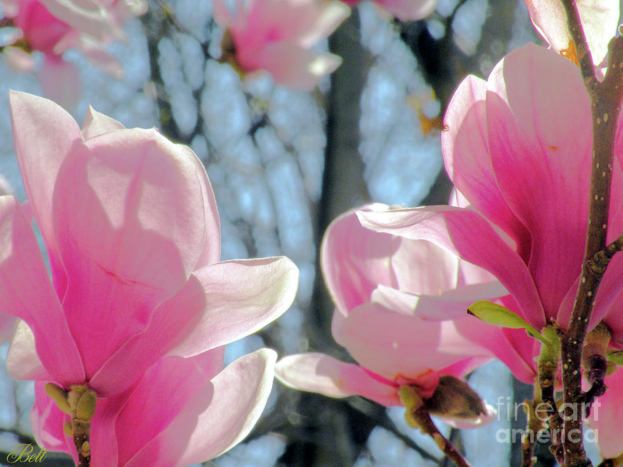 Flower Photograph - The Return Of Spring by Christine Belt