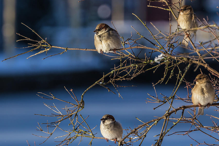 The Sparrows Community Photograph
