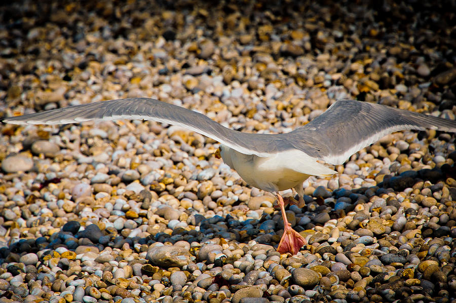 Loriental Photograph - The Takeoff by Loriental Photography
