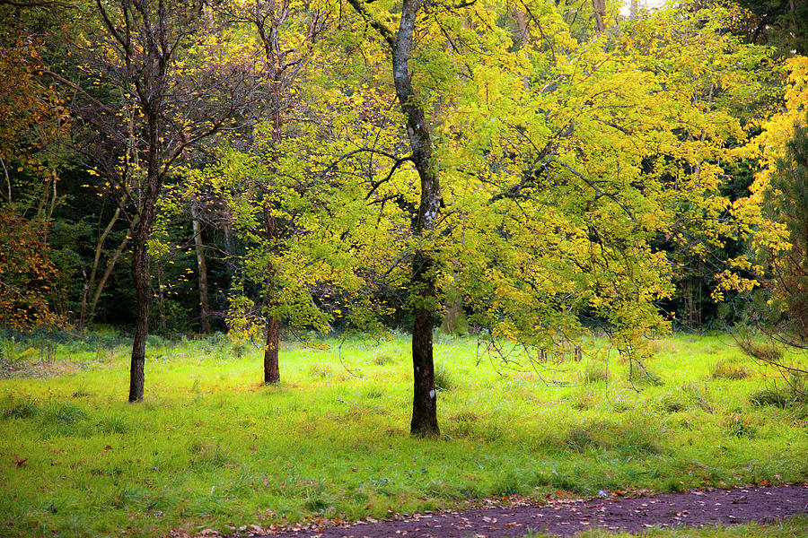 Thicket Of Colour Photograph