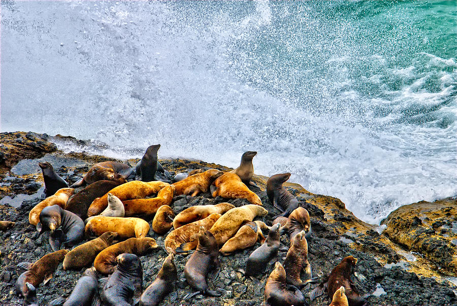 Sea Lion Photograph - This Is Oregon State No.18 - Sea Lion Splash by Paul W Sharpe Aka Wizard of Wonders