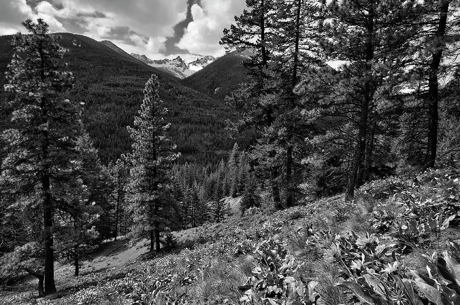 This Is Washington State No.1b - Klipchuck Photograph