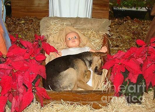 Dog Photograph - This Shepherd Keeping His Watch by Carol Wisniewski