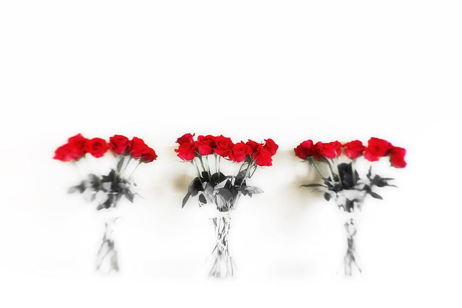 Three Dozen Roses Photograph