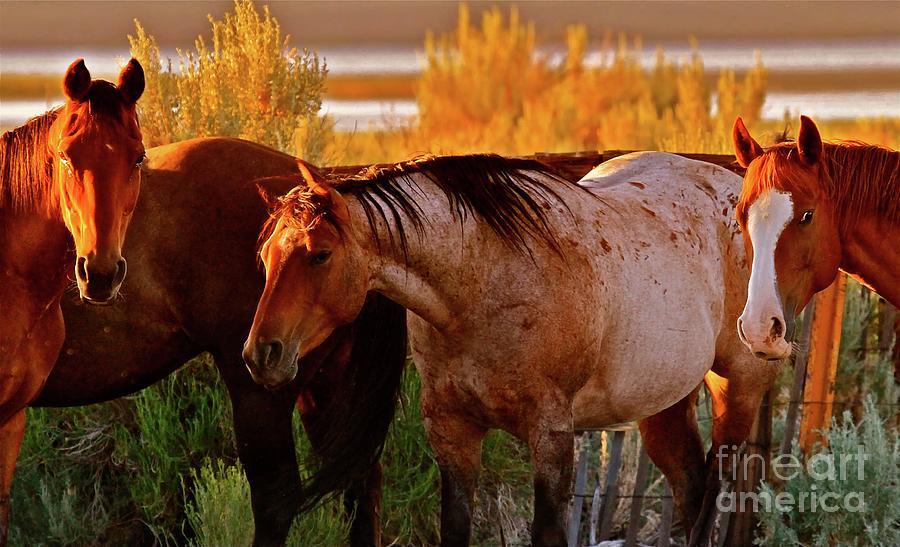 Three Horses Of A Suspicious Corral Photograph
