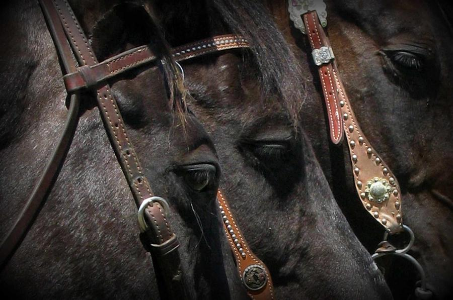 Horse Photograph - Three Of A Kind by Carla Froshaug