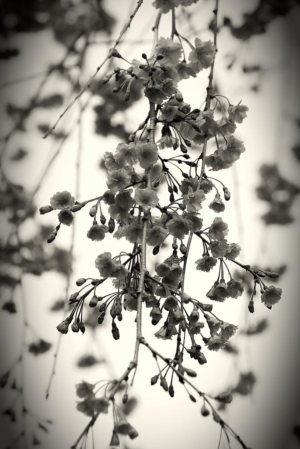 Black And White Photograph - Tiny Buds And Blooms by Angie Tirado