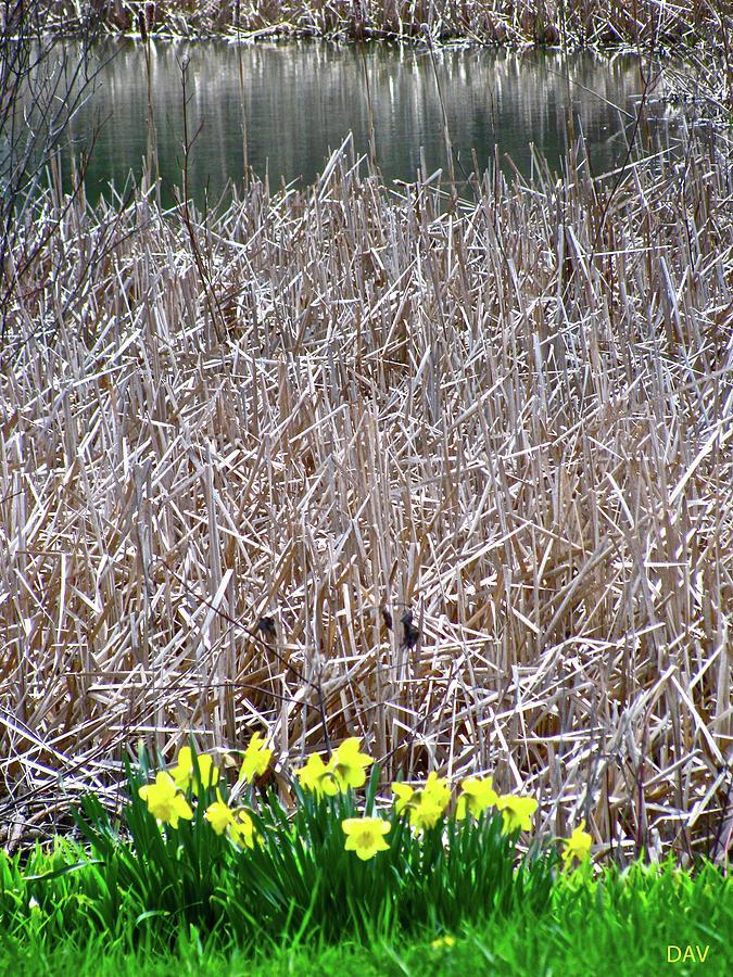 Tipping Into Spring Photograph - Tipping Into Spring by Debra     Vatalaro