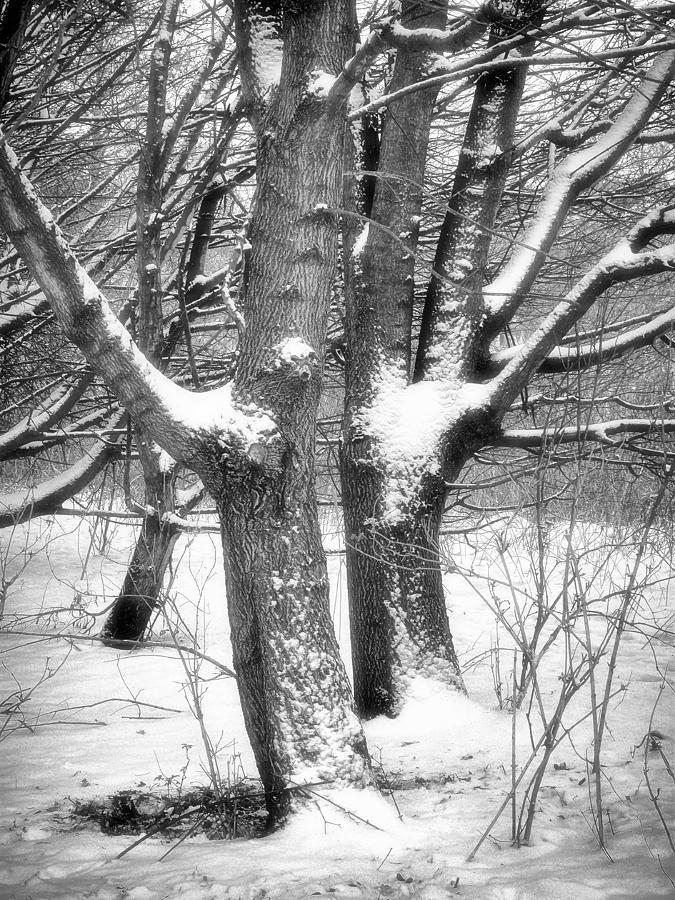 Trees Photograph - Together by Wim Lanclus