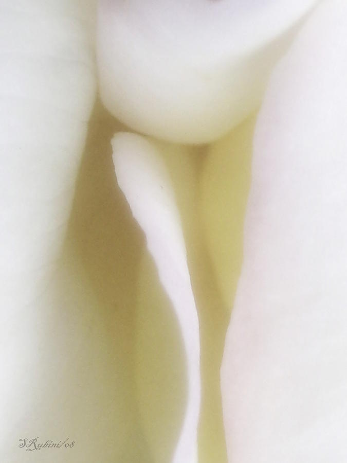 Flowers Photograph - Touch by Sandy Rubini