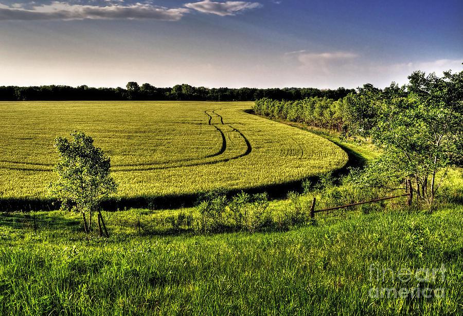 Landscape Photograph - Tracks by Fred Lassmann