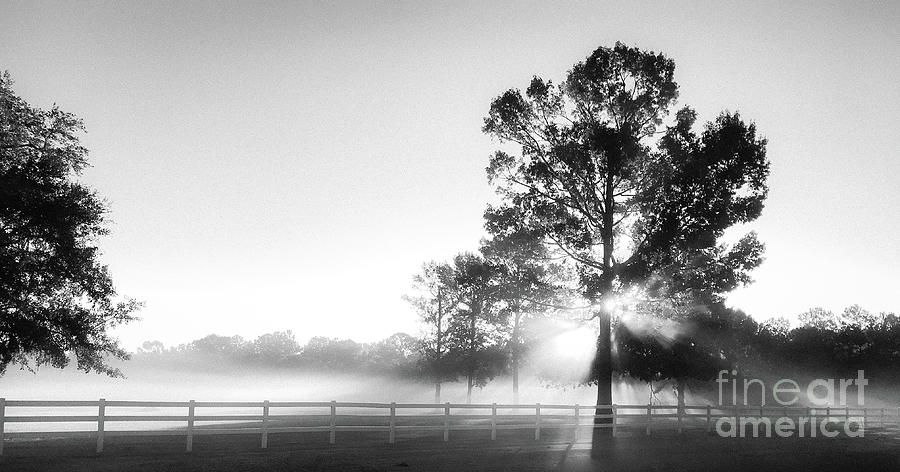 Tranquil Morning Fog Photograph