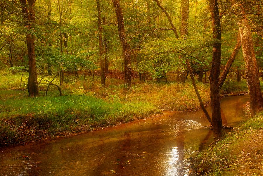 Landscape Photograph - Tranquility Stream - Allaire State Park by Angie Tirado