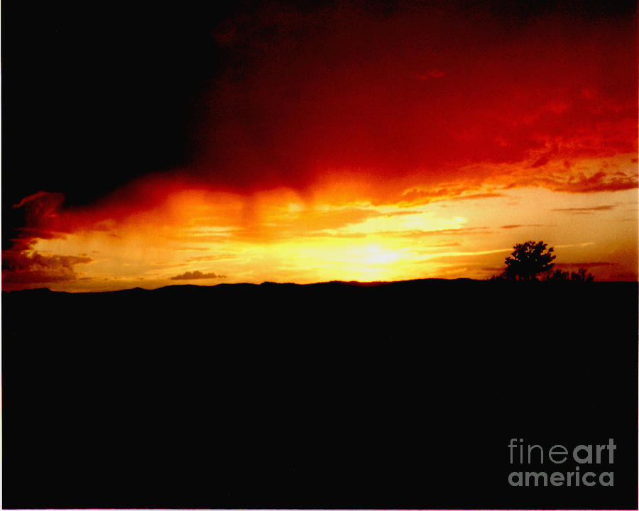Tree At Sunset Photograph